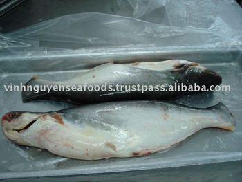 Frozen Pangasius Fillet Basa Fillet Swai Fish Fish Fillet