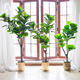 3-8 ft Artificial Fiddle Leaf Fig Bonsai Tree Potted Ficus Lyrata Plant