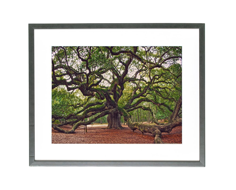 Angel Oak Tree Print, Charleston Photography, Angel Oak Photography Charleston Art, South Carolina Photography, Nature Landscape, Forest Art