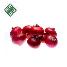 big red onion with cheap price