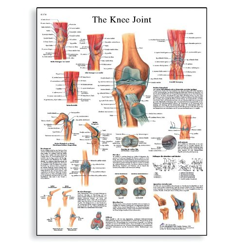 Cheap U Joint Size Chart Find U Joint Size Chart Deals On Line At