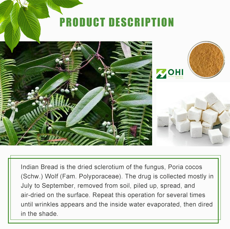 Poria cocos mushroom extract Chinese poria cocos extract for health care
