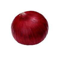 2017 crop fresh red onion with cheap price