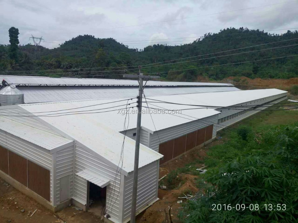 broiler chicks rate 98.5% with advanced poultry farm house design