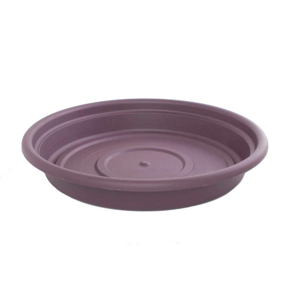 "Dura Cotta Round Saucer Planter (Set of 24) Color: Exotica, Size: 1.5"" H x 7.88"" W x 7.88"" D"