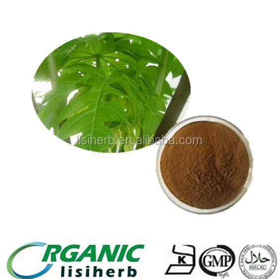 100% natural dried Papaya leaves extract powder for sale
