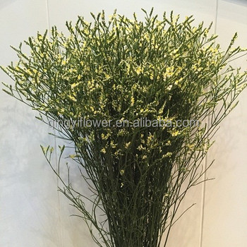 1KG/ bundle more than 65cm Colorful hot sell names of flowers used for decoration limonium yellow
