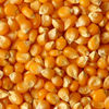 Bulk Yellow Maize Supplier
