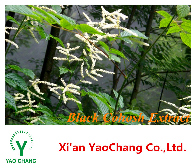 Herbal Extract & Female Health Care Products Black Cohosh Extract Powder