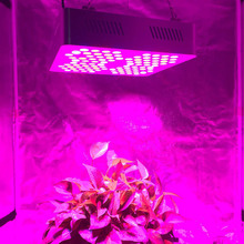 200w Full Spectrum Dragon Fruit LED Grow Light For Greenhouse