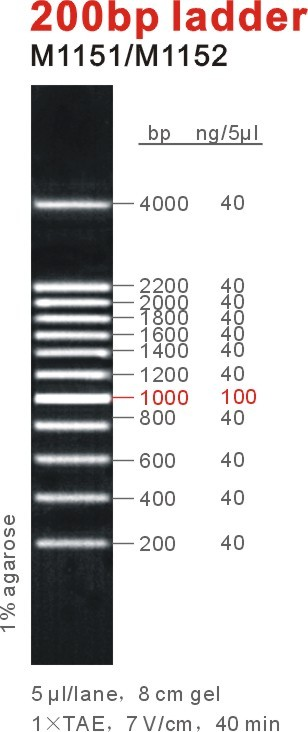 200bp DNA Ladder