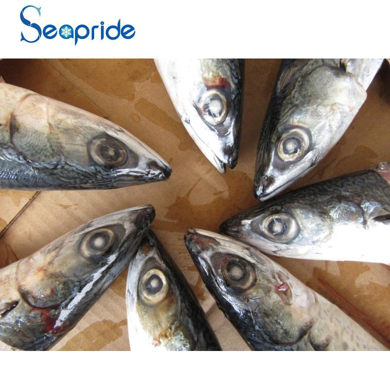 mackerel 300-400G-65.jpg