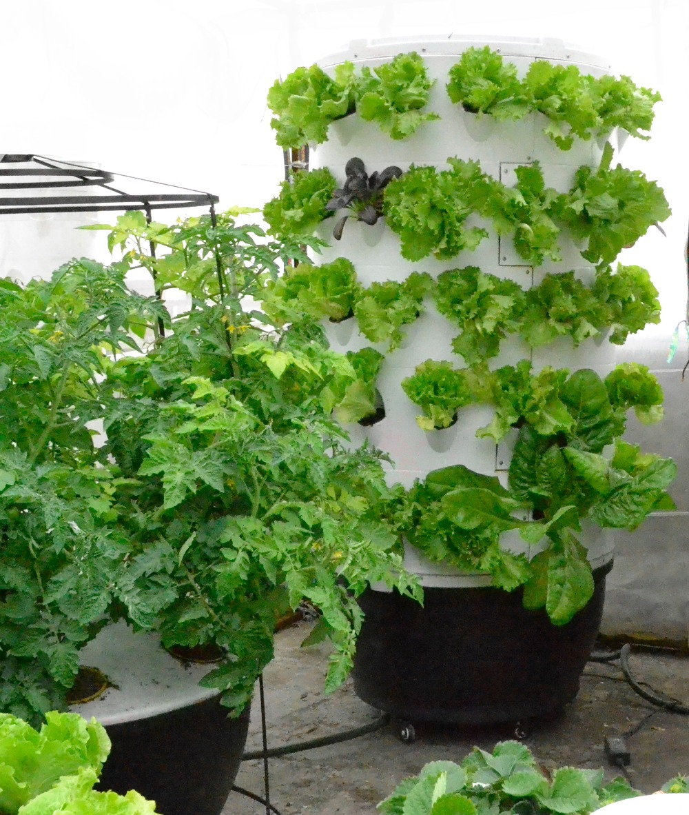 Hydroponic Garden Kit Free Irse Indoor Garden Kit Hydroponics Led Growing System Self Watering