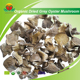 Most Popular Organic Dried Grey oyster mushroom