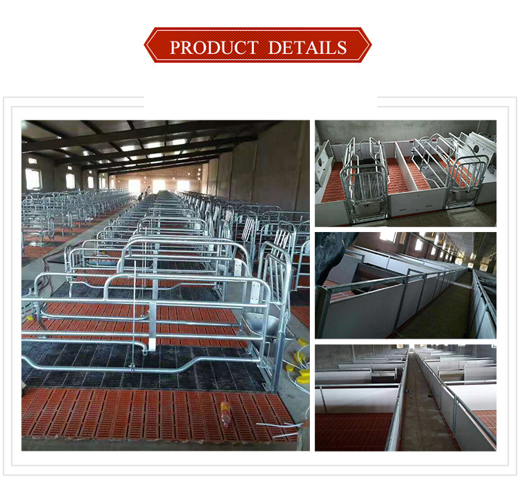 Sow farrowing crates for pigs farming equipment