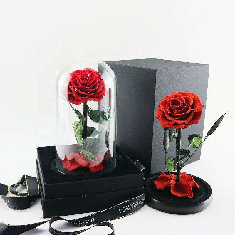 Beauty Beast Enchanted Bella Rose Preserved Flower In Glass Dome