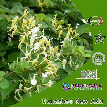 Honeysuckle Extract/Honeysuckle Flower Extract/Lonicera Japonica Thunb P.E.