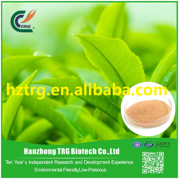dry green tea support metabolism with CE certificate