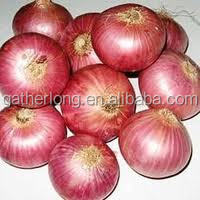 with fast delivery from Chinese factory red onion