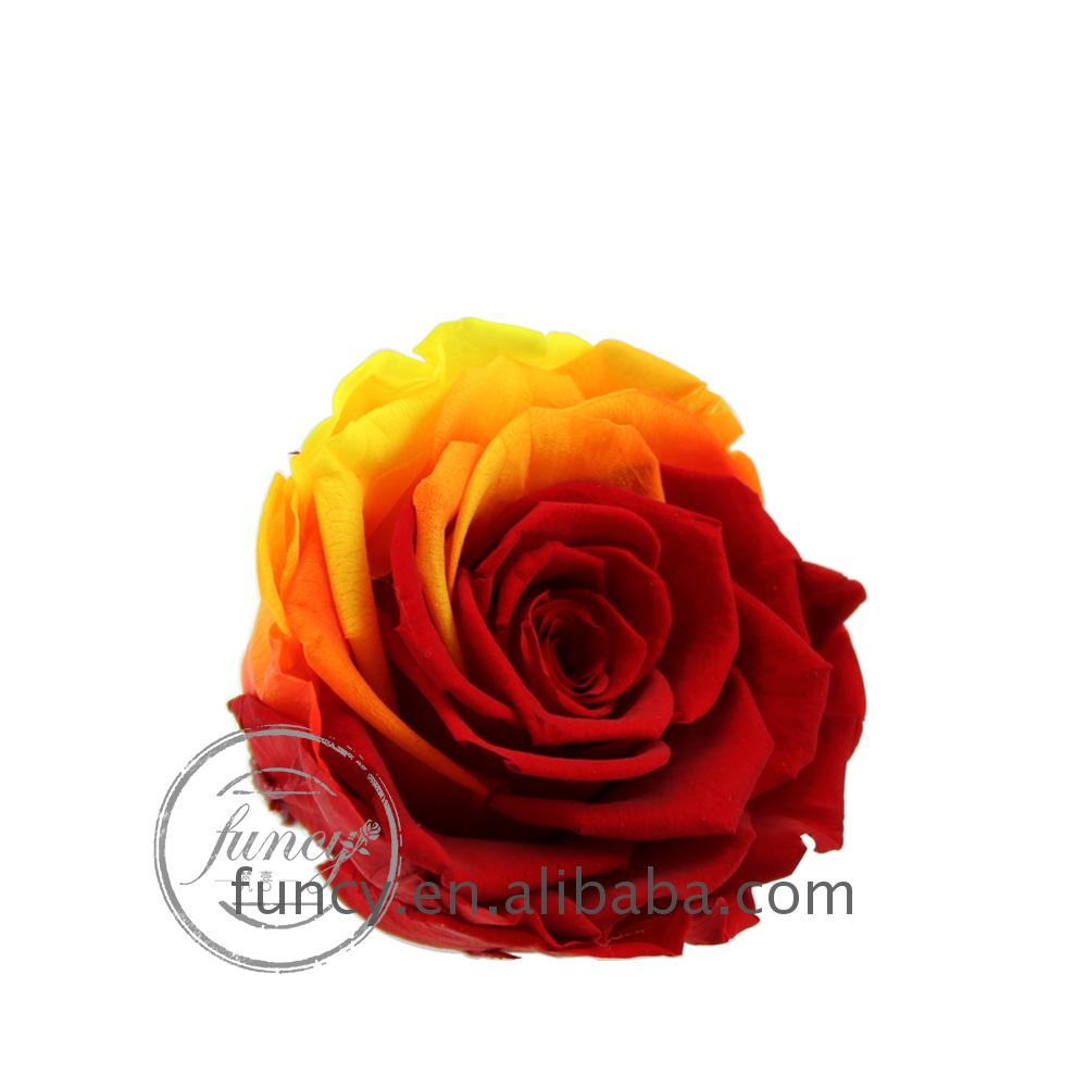 8cm Red and Yellow Gradient Color Preserved Forever Rose Flower