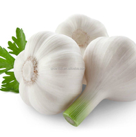 Export Quality Fresh Super White Garlic For Sale