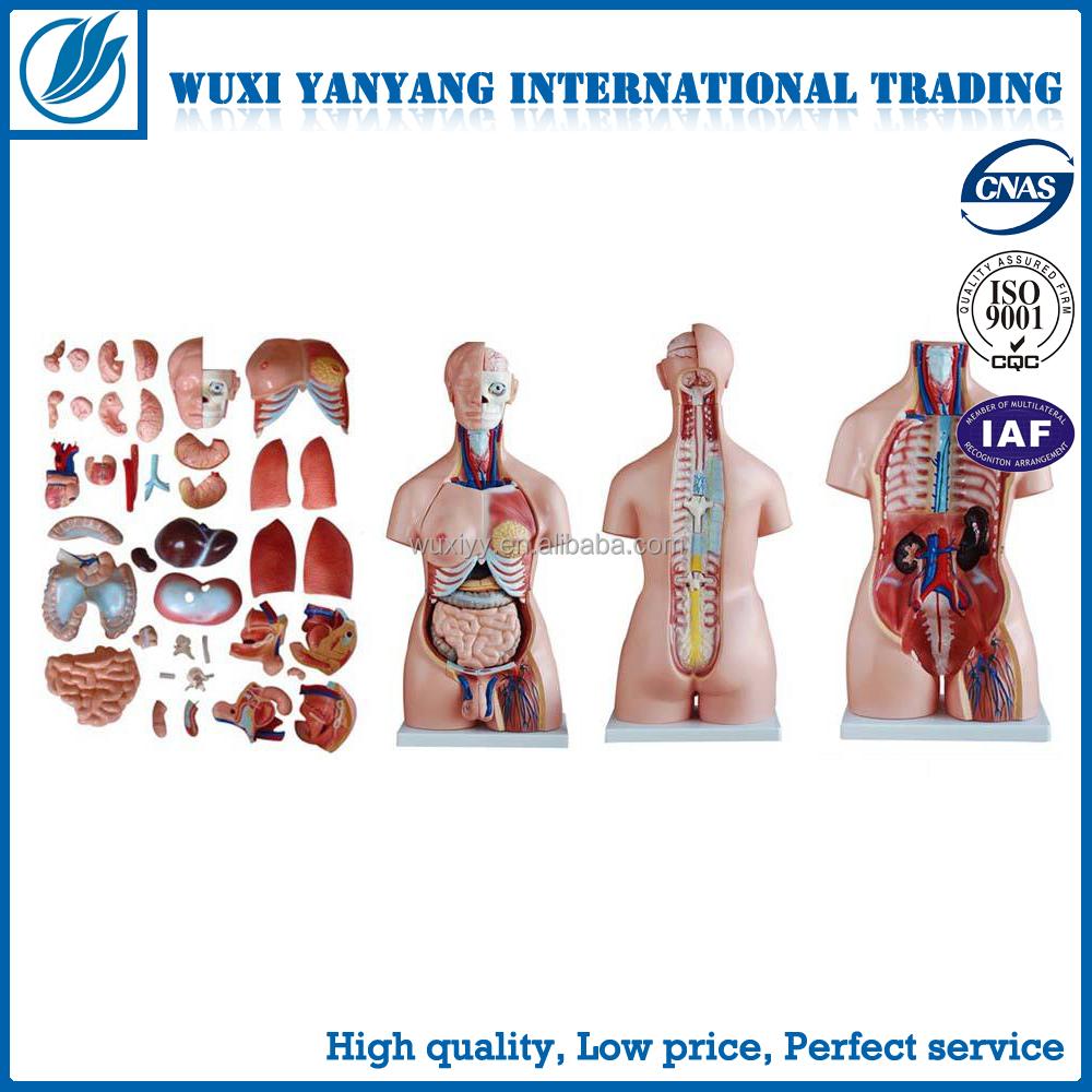 Material de pvc de alta calidad con partes del cuerpo humano, torso ...