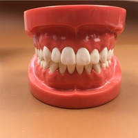 Standard Teeth Model with FE Articulator/ Plastic Dental Model of Teeth for Teaching or Training Use