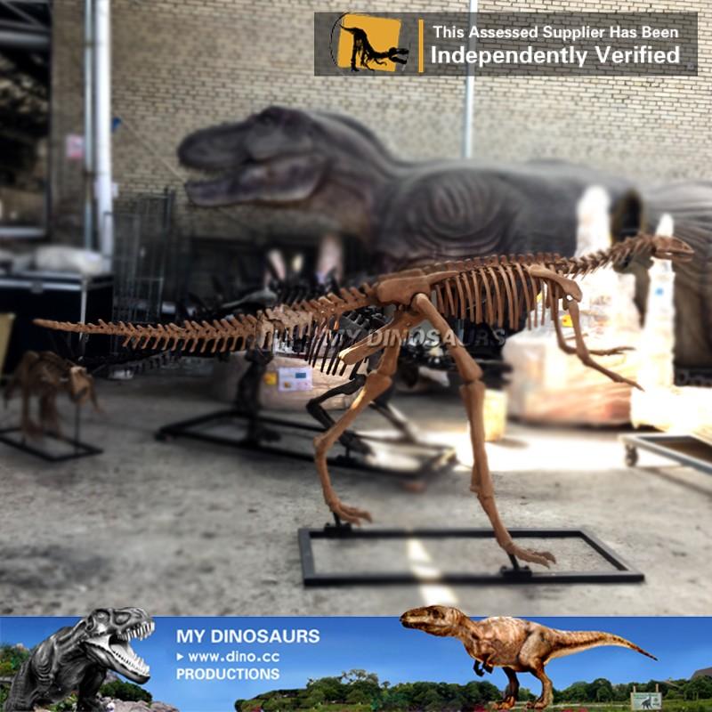 Mi Dino-esqueleto Réplicas Fósiles Venta Exposición Del Museo ...