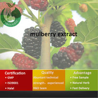 Pure Natural Mulberry/Mulberry Leaf Extract/Mulberry Extract