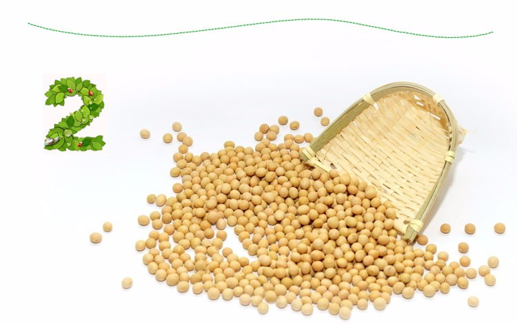 Non-GMO organic yellow soybeans price