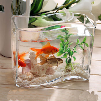 Handmade Glass Transparent Fish Tank Different Types Transparent ...