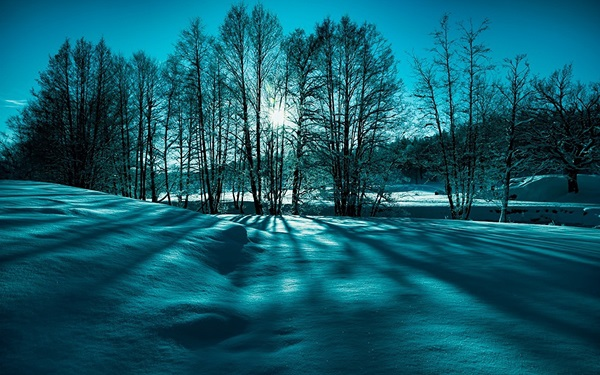 Painting Cuadros Decoracion Landscape Snow Trees Sunny <font><b>Winter</b></font> Sunrise Nature Beauty 4 Sizes <font><b>Home</b></font> <font><b>Decoration</b></font> Canvas Poster Print