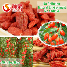 Natural Dry Goji Berry Healthy Berry