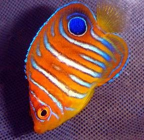 Who Is The Best Tropical Fish Food Supplier