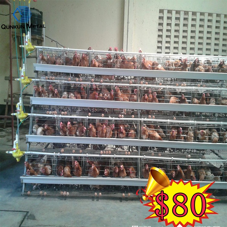 high quality automatic poultry layer chicken cage for farm