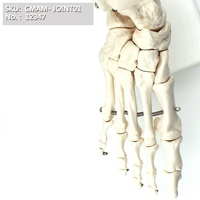 Human Foot Joint Anatomy, Human Foot Bone Skeleton Model on Base,Life Size, Science Study Display Teaching Medical Models, 12347