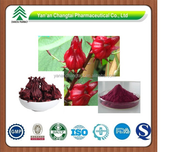 GMP factory supply herb organic Rose Eggplant extract powder