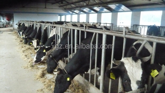 low price advanced automated cattle farm made in china