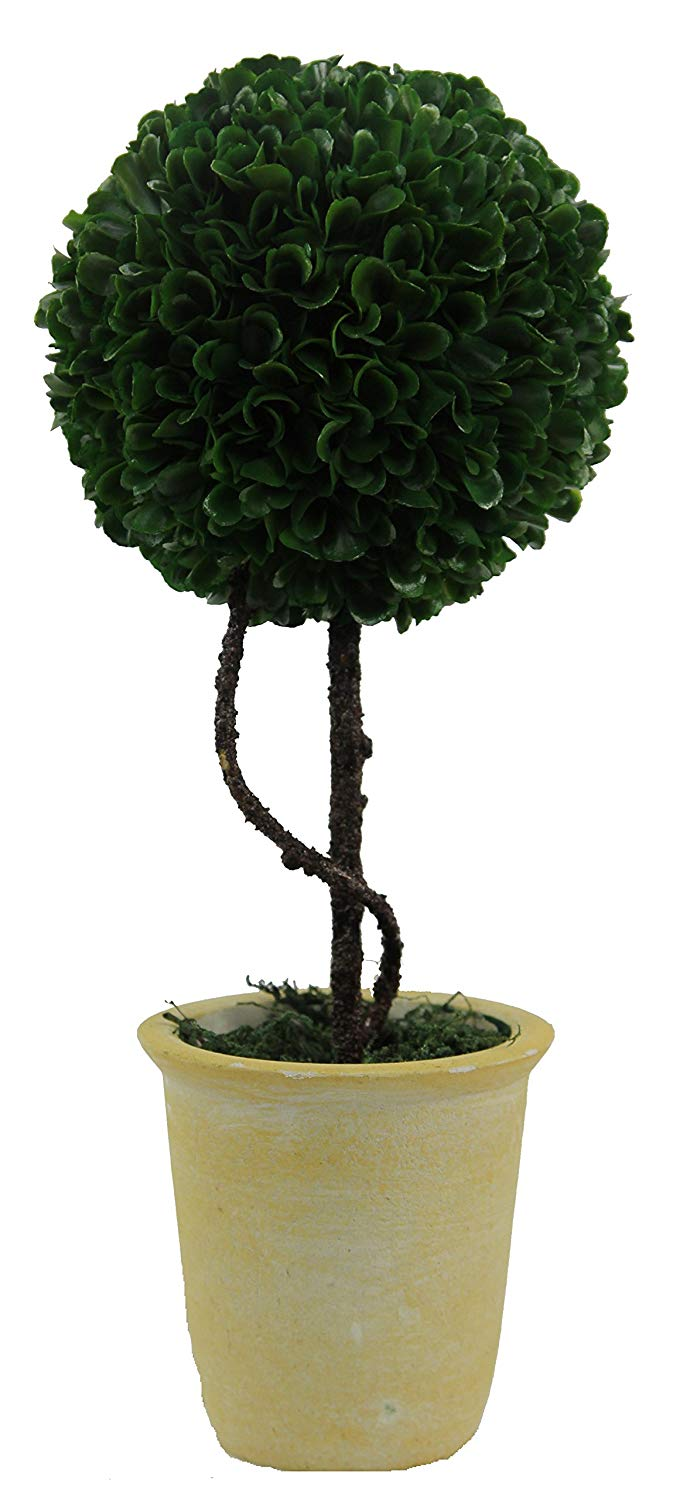 Cheap Boxwood Plant Price Find Boxwood Plant Price Deals On Line At Alibaba Com
