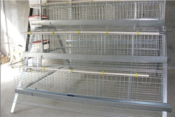 Frda-quail Cage Quail ...