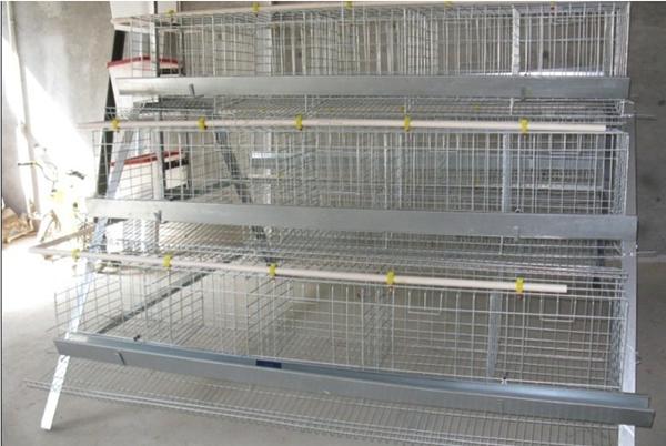 Frda-quail Cage Quail Farm Equipment Used Chicken Cages ...