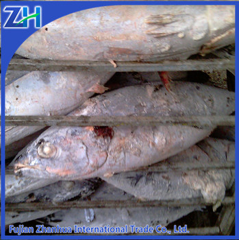 Export import frozen tuna fish food price seafood for Tuna fish price