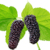 100% natural mulberry extract with high quality
