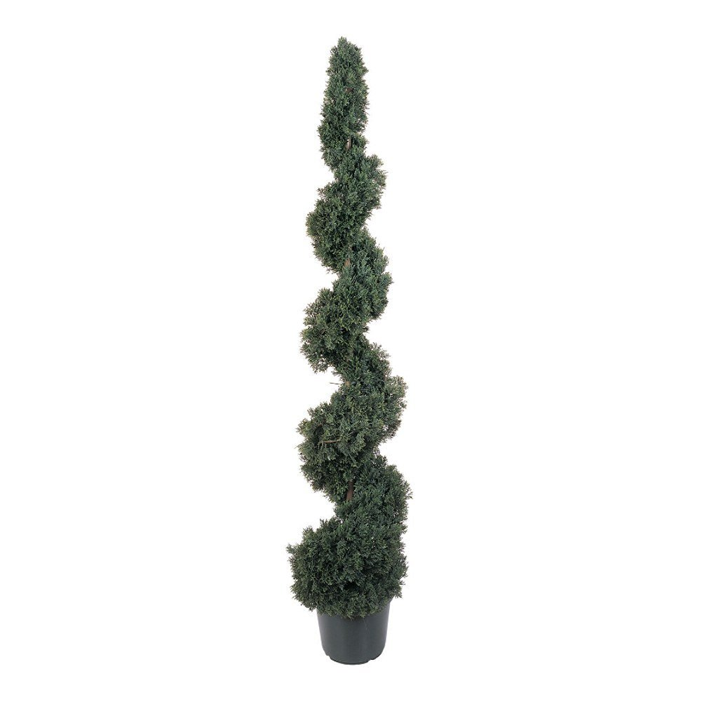 Cedar Spiral Silk Tree (Indoor/Outdoor) - 5 Feet Tall
