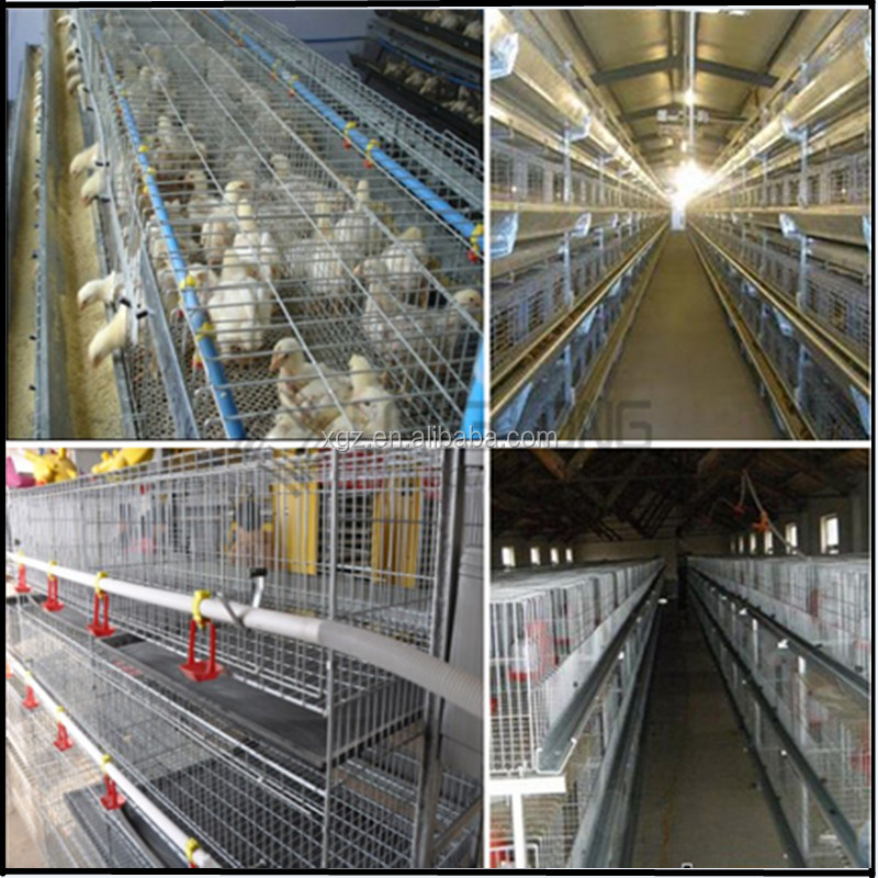 Prefab automated layer poultry farm