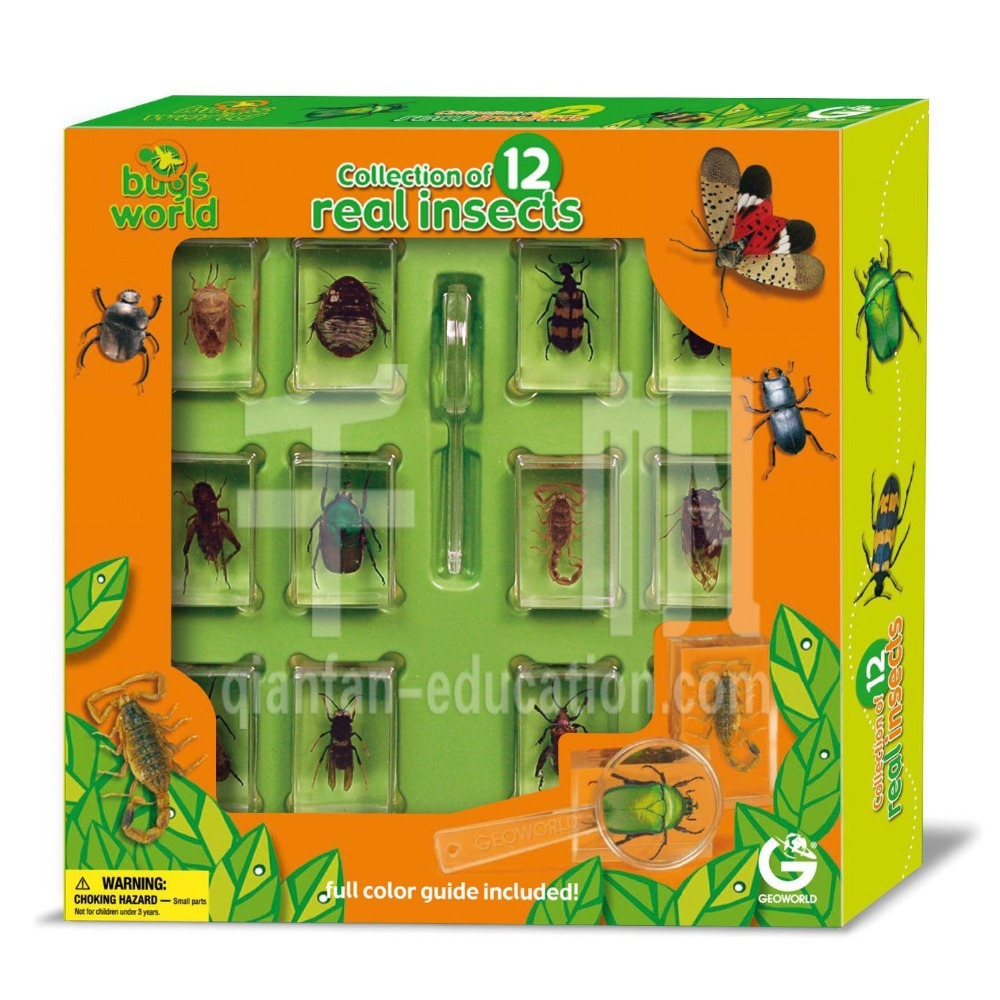 Leaf Beetle real insect resin paperweight kids toys