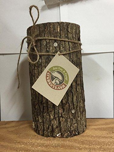 Mr. Stumpy Mushroom Log DIY Shiitake Mushrooms Ready to Grow Your Own