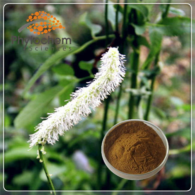 wholesale Black Cohosh Extract for Dietary supplement