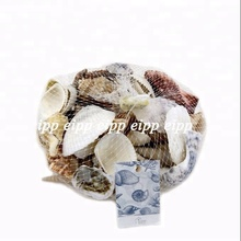 Single Shells or Assorted Sea Shell Natural Packed By Net Bag or Kraft Box 350g / pc, 400g/ pc