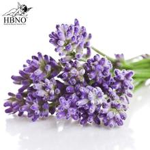 Bulk Supplier of Organic Pure Lavender Essential Oil